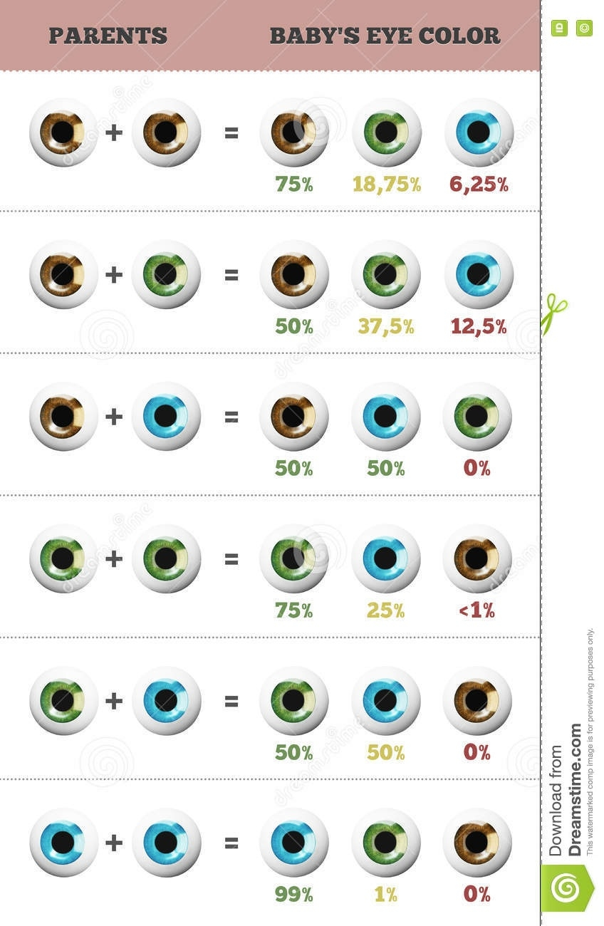 Baby Eye Color Predictor. Likelihood Of Eyes Color Of The Baby  Baby Prediction Plan Calendar Color