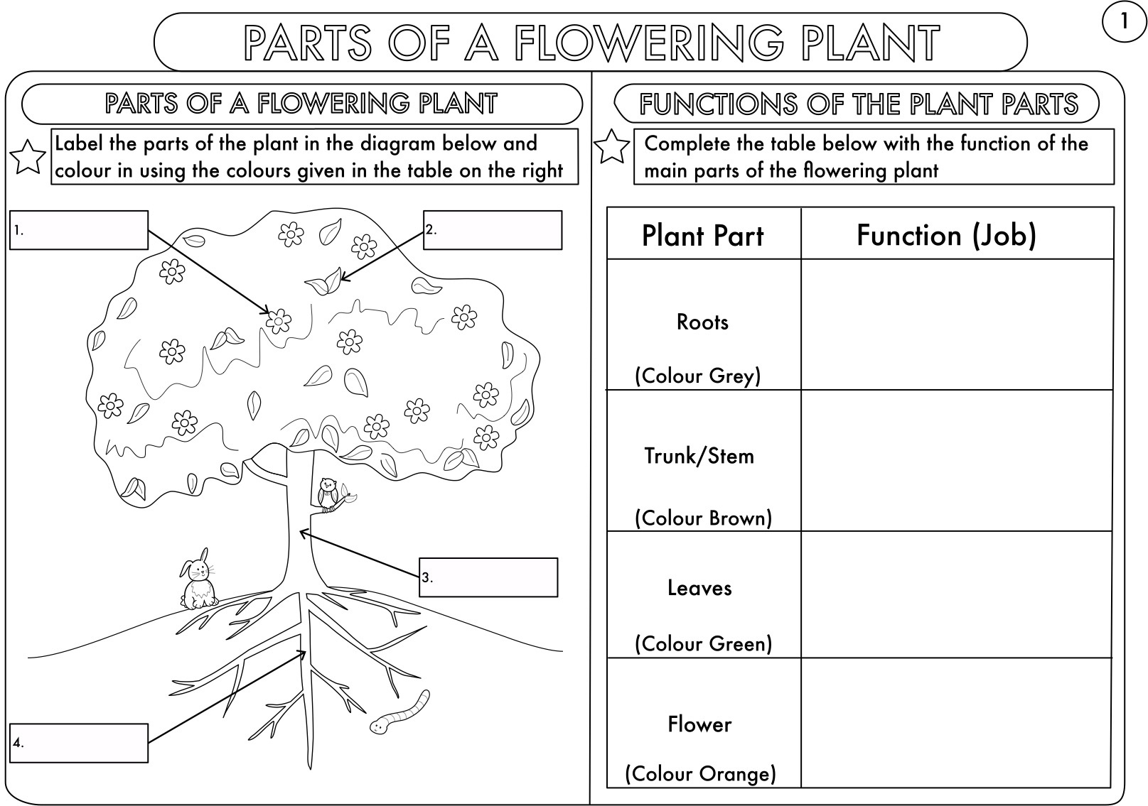 Fresh Lettuce Biology Resources - Teaching Resources - Tes  Colouring In Square Sheets For Year Three No Color