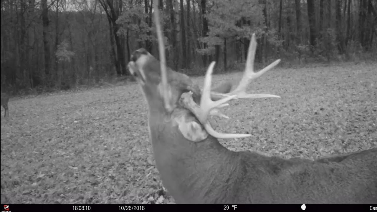 2019 Whitetail Rut Forecast And Tools Of The Rut  2020 Whitetail Rut Predictions For Pennsylvania