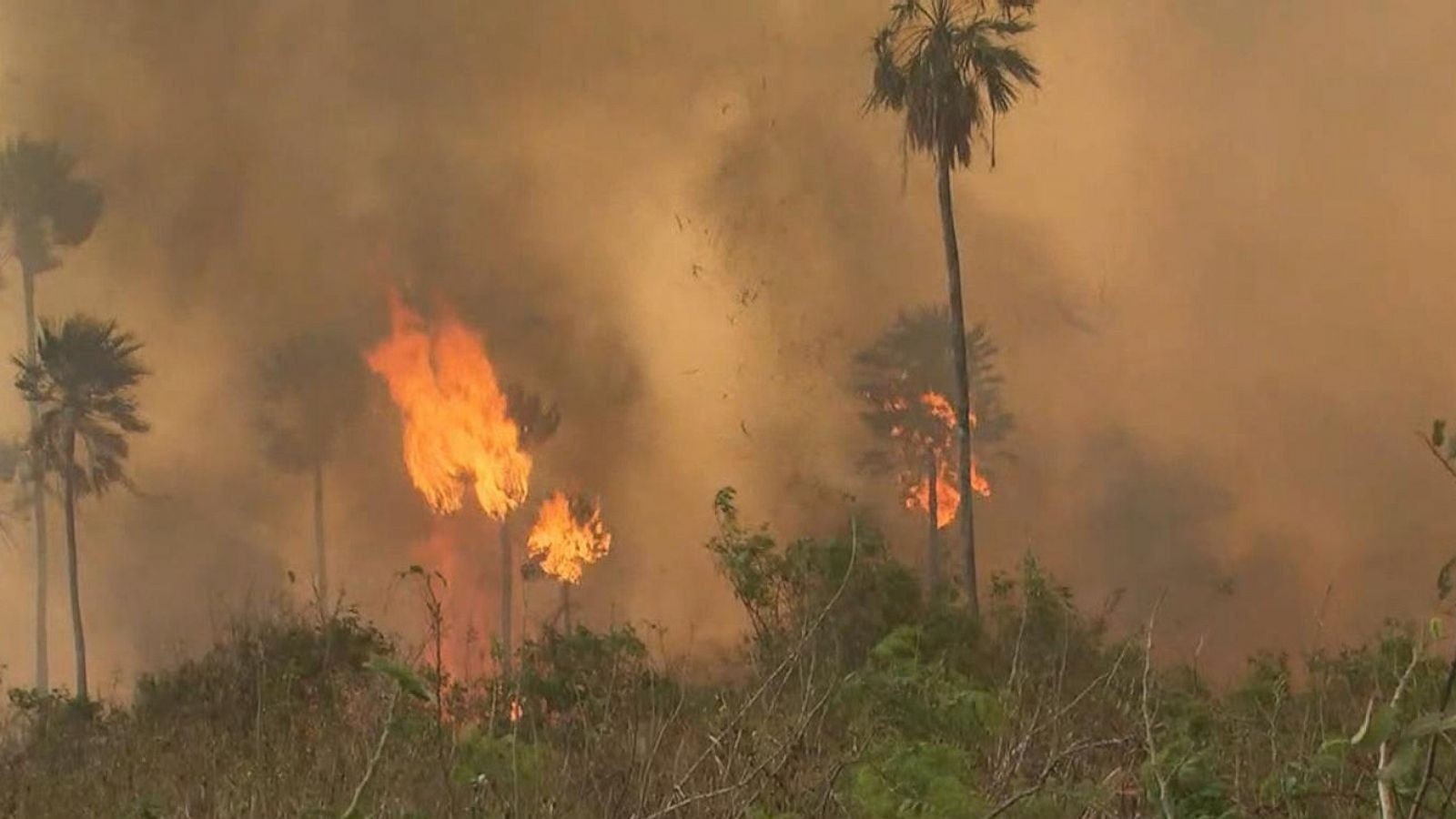 Battling Brazil's Fires With Mats And Water Tanks  Fire Glendale August 2020