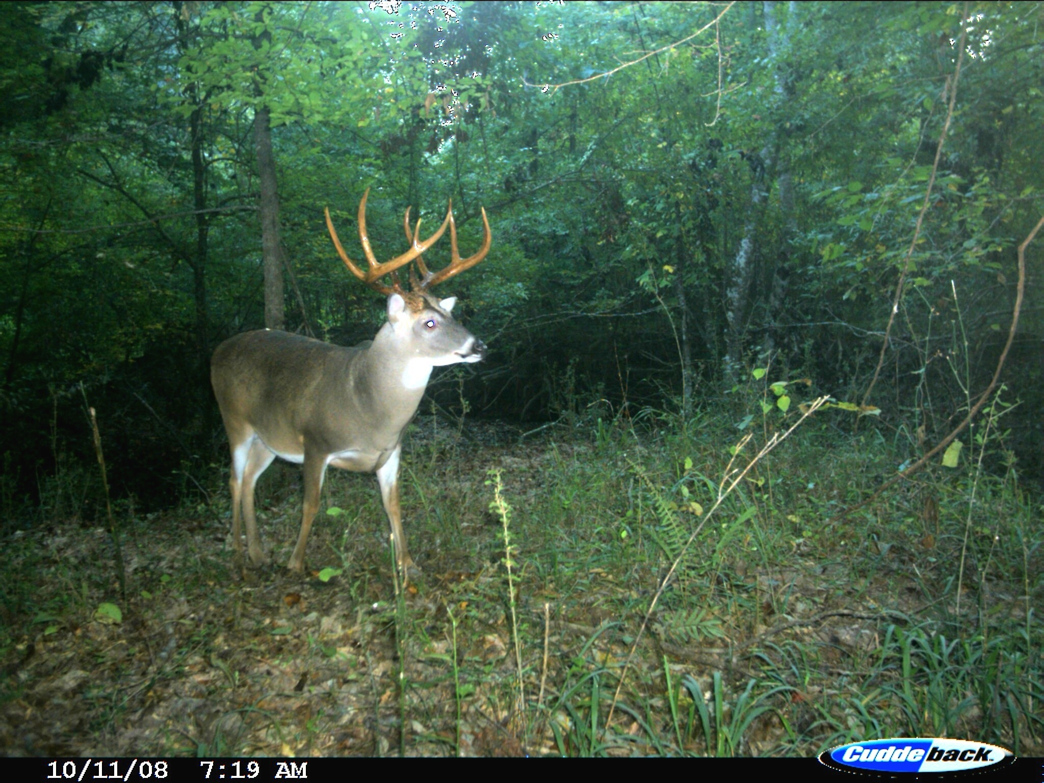 Exclusive: Peak 2016 Rut Forecast For Southern Deer Hunters -  When Is Whitetail Rut In Georgia