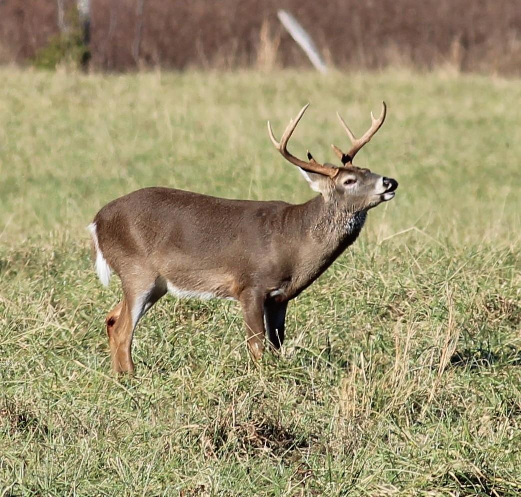 Georgia's Archery Deer Hunting Season Opens Saturday, Sept  Whitetail Deer Rut In Georgia 2020