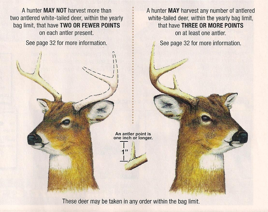 Maryland Bucks Whitetail Hunting  Deer Rut Calendar