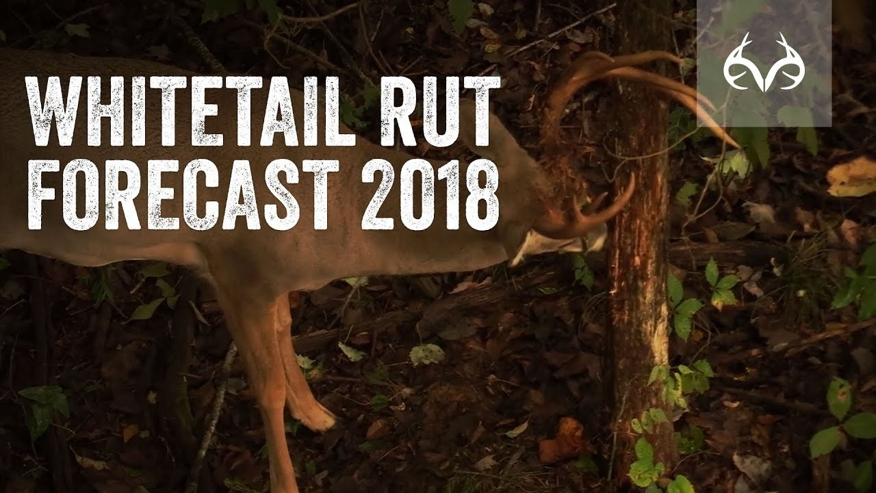 The Whitetail Rut Forecast For This Season  Deer Rut Forecast 2020