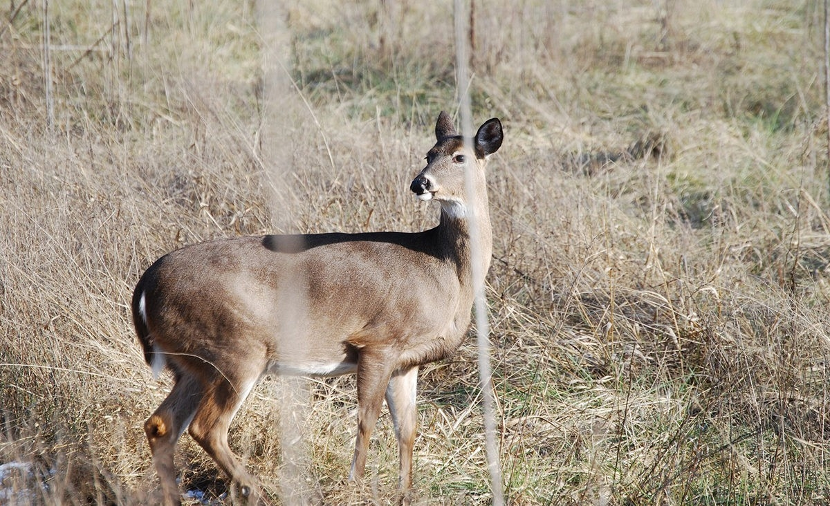 Understanding And Hunting The Second Rut | Bone Collector  Deer Rut Schedule