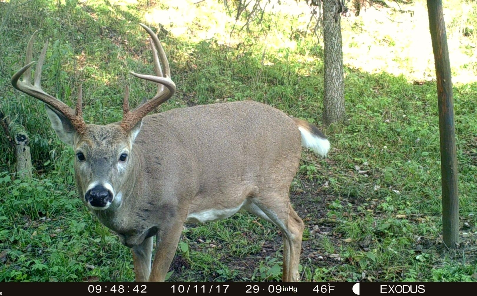 2017 Critical Pre Rut Whitetail Forecast Alert | Whitetail  2020 Deer Hunting Forecast