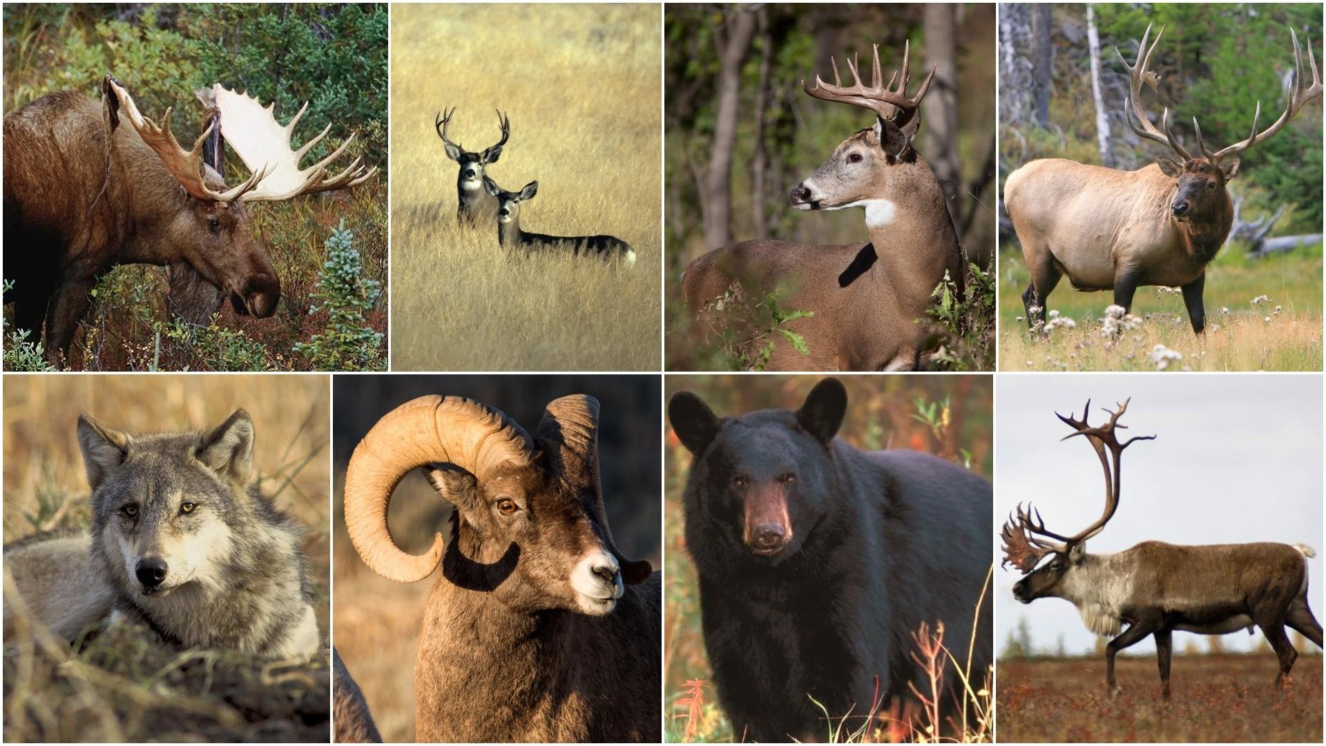 2018 Canadian Hunting Forecast: Top Spots For Deer, Moose  2020 Deer Hunting Forecast