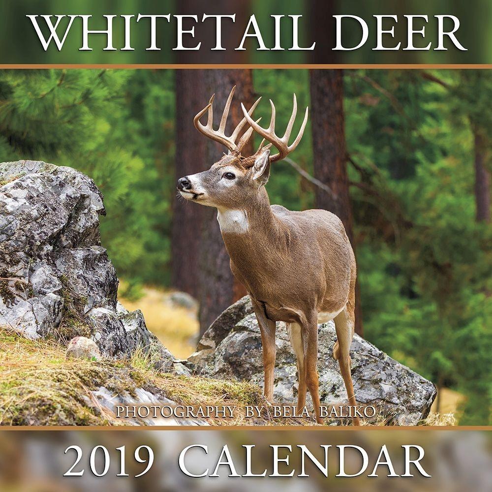 Deer And Deer Hunting Calendar 2019  Shopdeerhunting.com 2020 Calendar Rut Forecast