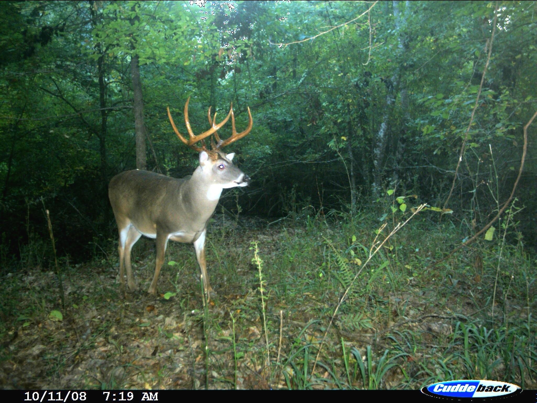 Exclusive: Peak 2016 Rut Forecast For Southern Deer Hunters  Georgia Deer Forecast