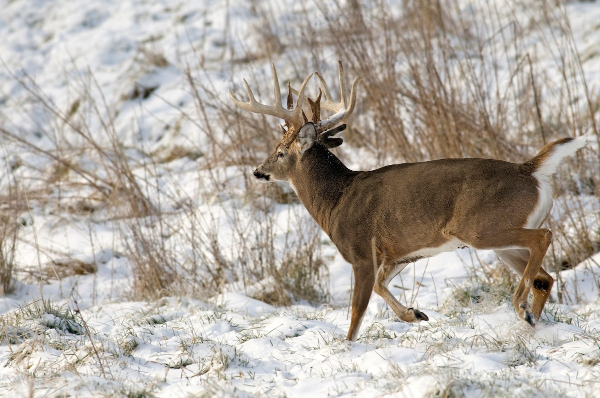 Moon Phases Don't Affect The Deer Rut | Grand View Outdoors  Nys 2020 Deer Rut