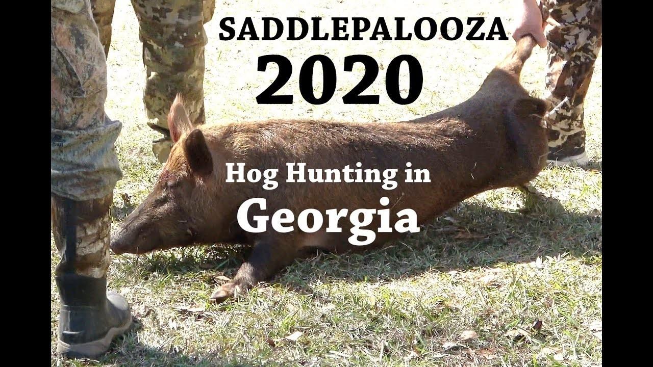 South Georgia Hog Hunting - Saddlepalooza 2020  2020 Hunting Season Georgia
