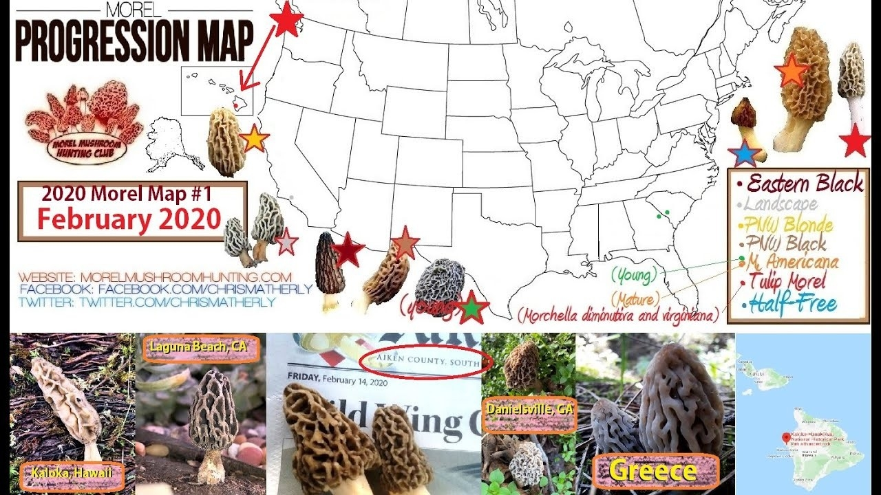 The 2020 Morel Mushroom Season Has Now Started!  2020 Deer Season Forecast