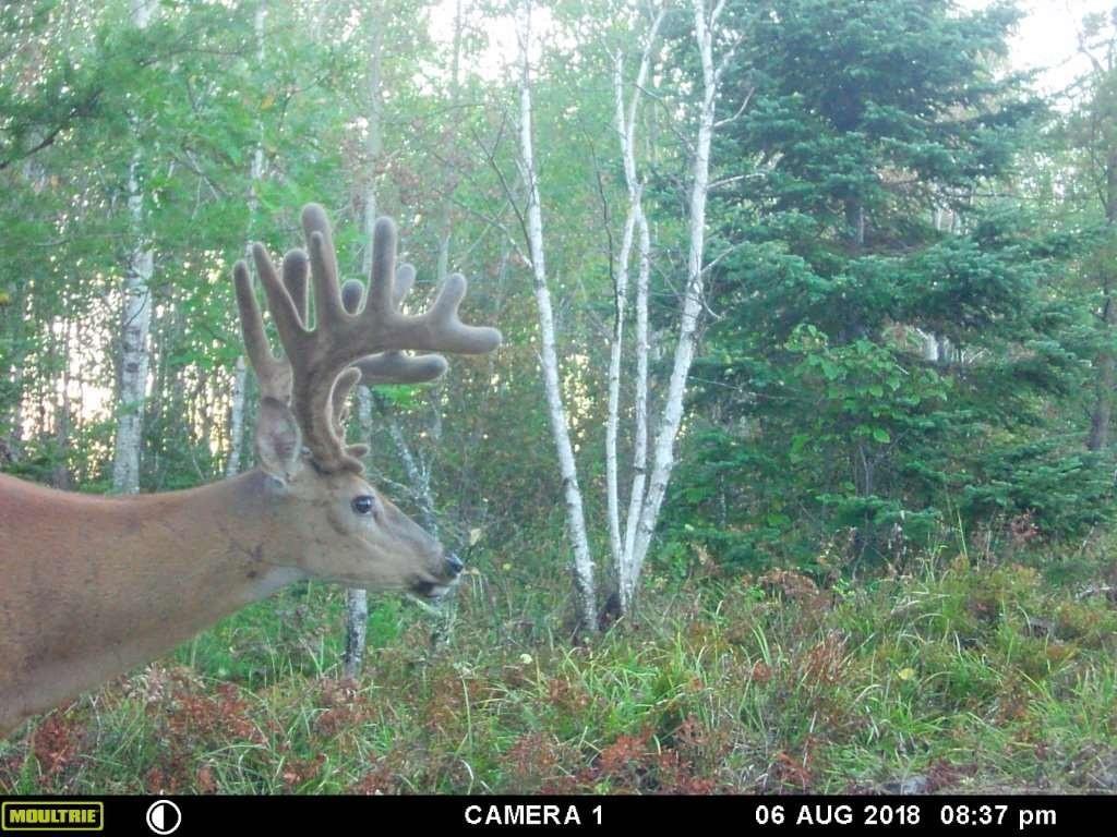 Whitetail Deer Hunting In Rut, 2020  2020 Deer Hunting Forecast
