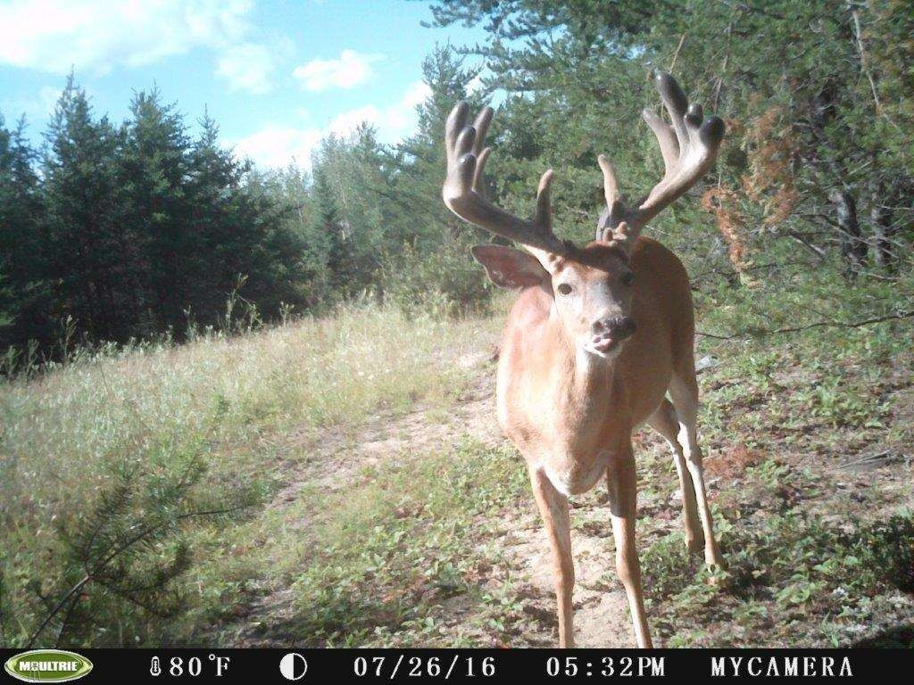 Whitetail Deer Hunting In Rut, 2020  Deer Rut 2020