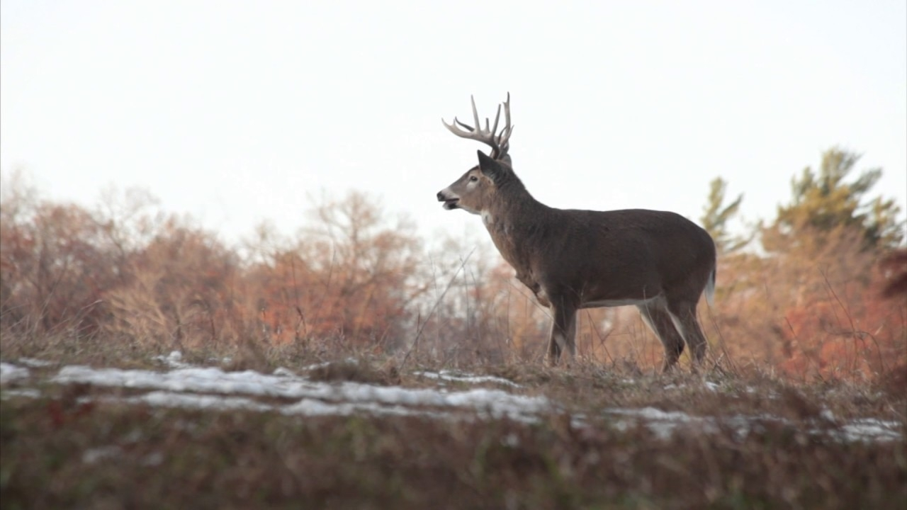 Whitetail Rut: Three Things You Need To Know  Nys 2020 Deer Rut