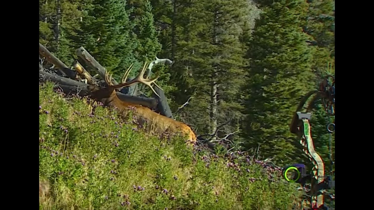 17 Videos Of The Closest Elk Hunting Encounters Of All Time  Rut Forest For 2021 2021 In Ark