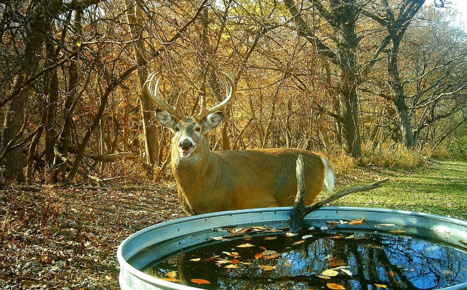 2016 Rut Forecast Weekend Timing | Whitetail Habitat Solutions  Indiana Deer Forcast