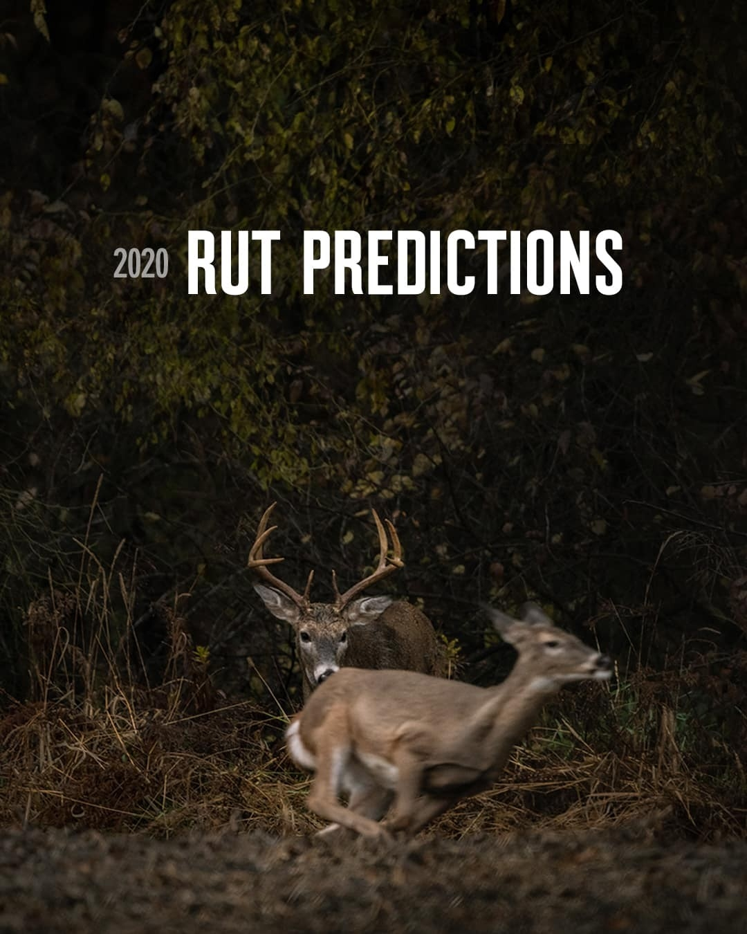 2020 Rut Predictions | Onx Maps  When Will The Rut Be In Pa In 2021
