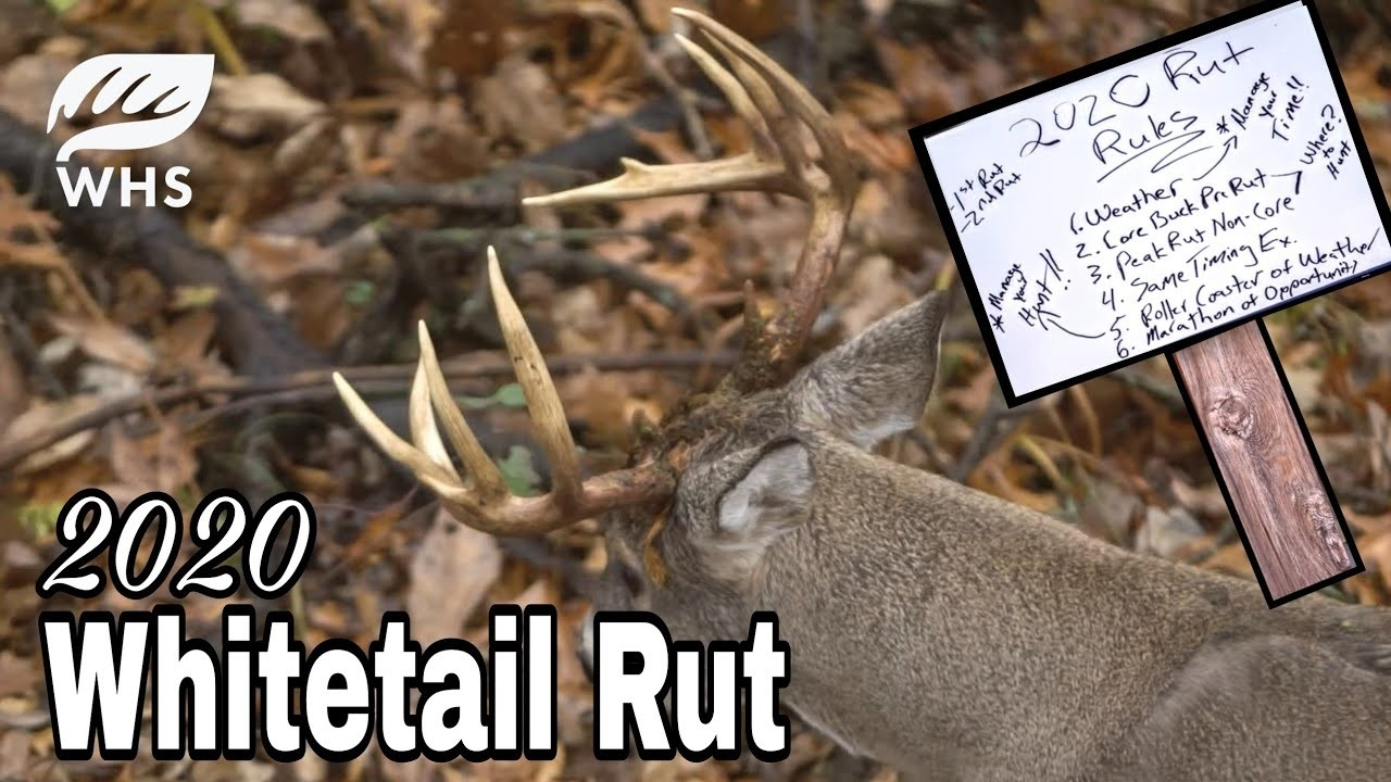 2020 Whitetail Rut Forecast | Rut Rules  Missori Rut Prediction 2021