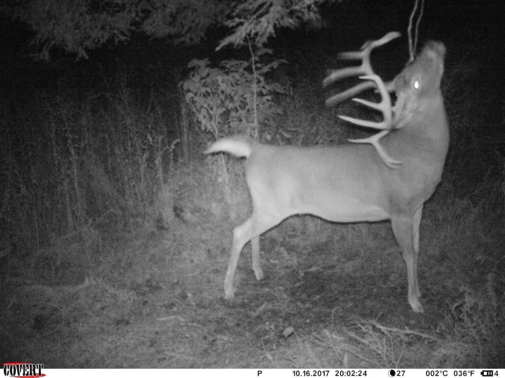 Appalachian Whitetail Hunting Part 2: Tactics For Taking A  Whitetail Deer Rut In Pa