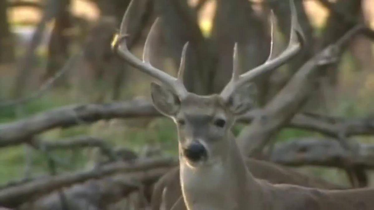 Deer Gun-Hunting Week Begins In Ohio  Nys Deer Forecast For 3H