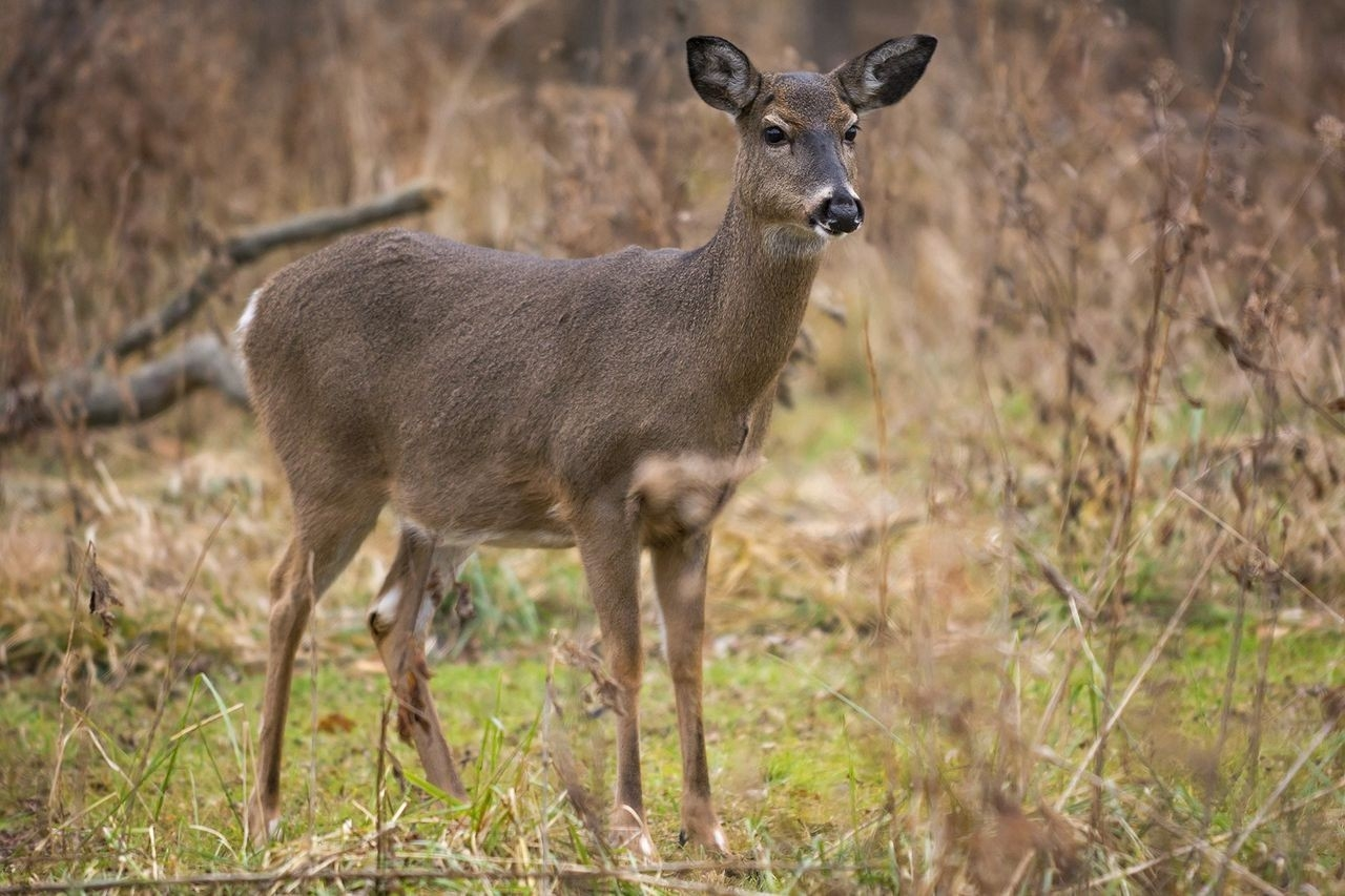 Experts: Reasons Why Upstate Ny Deer Hunting Is Off To A  When Is The Deer Rut In Ny