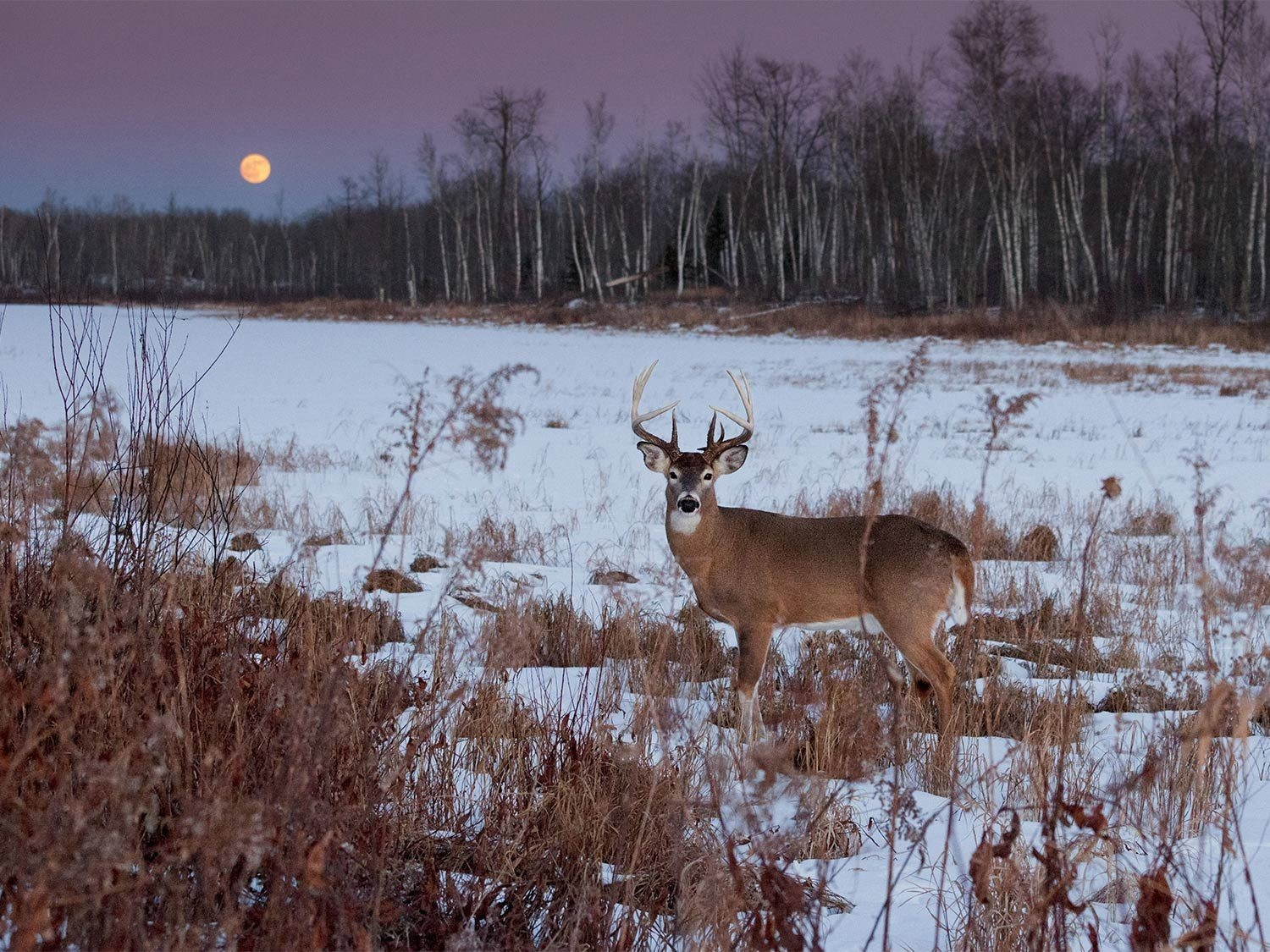 How Moon Phases Will Impact Deer Hunting During The Rut This  Peak Deer Movement In Dodge County Ga