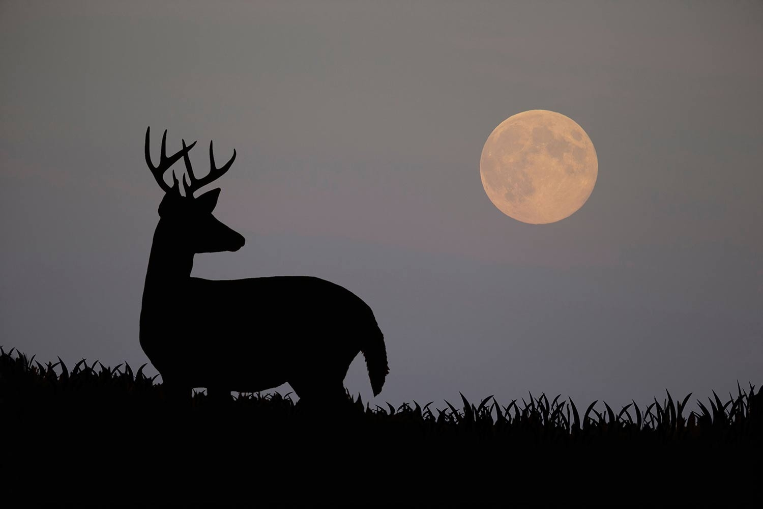 How Moon Phases Will Impact Deer Hunting During The Rut This  When Is Deer  Rut Season In  Gastonia Nc 2021