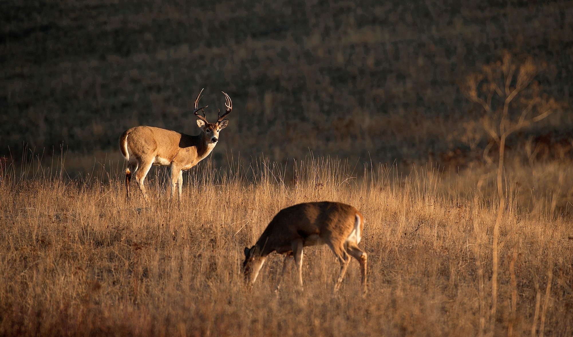 How To Hunt The Phases Of The Rut | Deer Hunting | Realtree Camo  Whitetail Pre Rut Dates In Pa