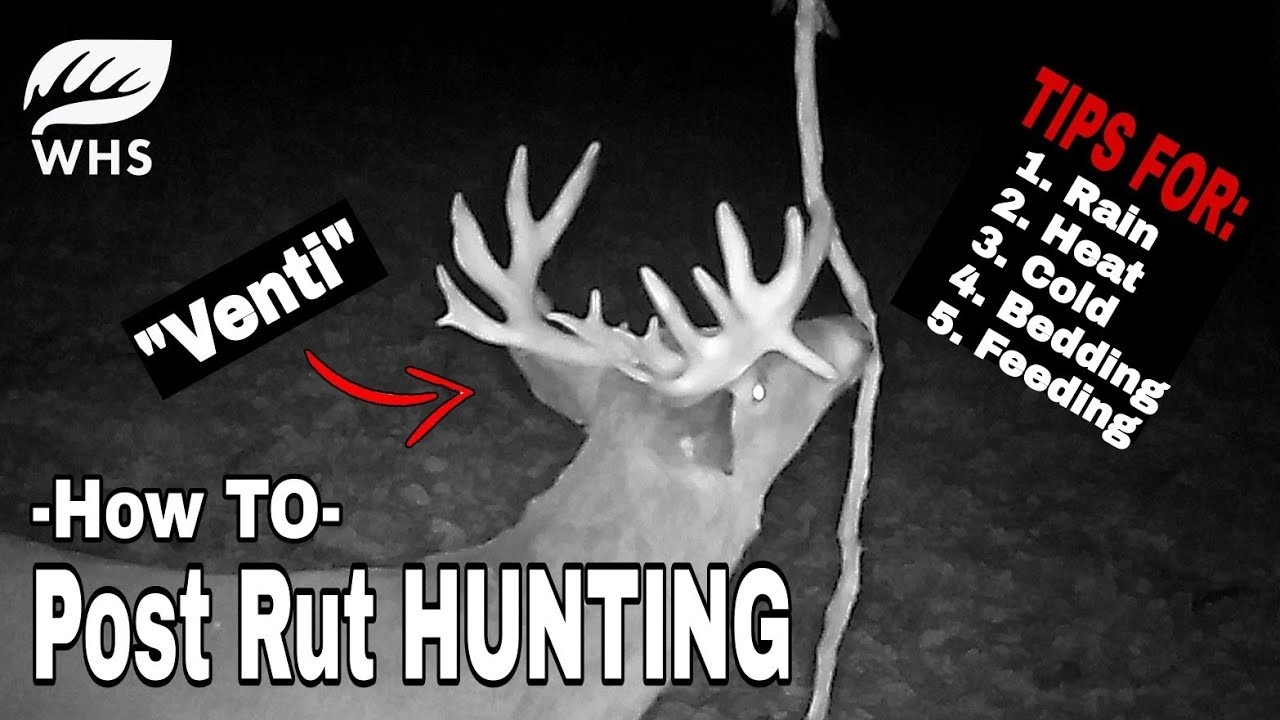 How To Hunt The Post Rut  2021 Deer Rut Forecast