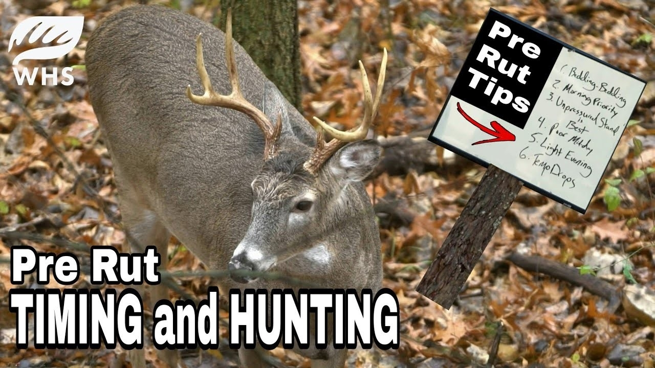 How To Hunt The Pre Rut  2021 Deer Rut Forecast