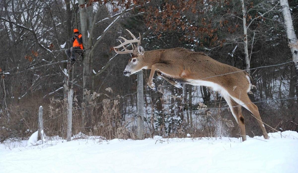 Hunting Strategies For Post Rut Bucks - Legendary Whitetails  Deer Rut Nys