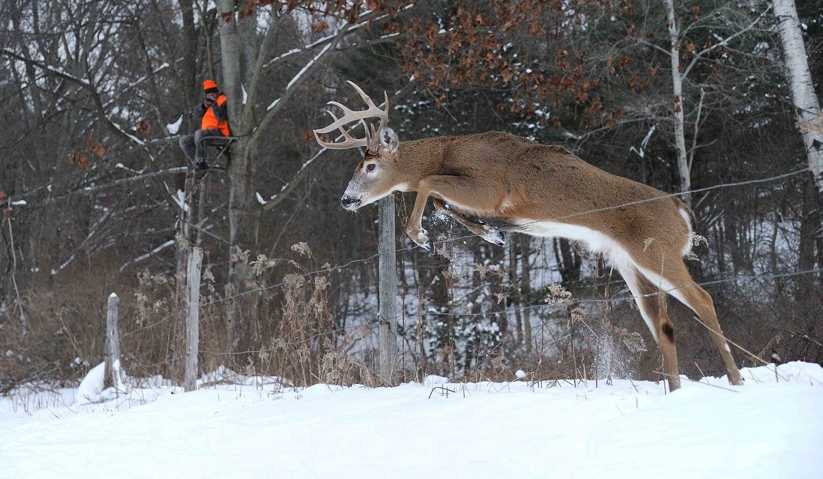 Hunting Strategies For Post Rut Bucks - Legendary Whitetails  When Is The Deer Rut In Ny