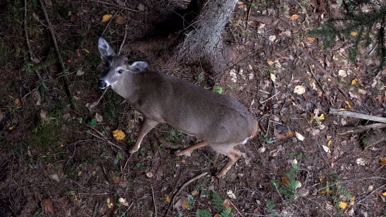 John'S Archery Rut Season 2019 - Pennsylvania Bow Hunting Whitetail Deer -  Western Pa 2D  Whitetail Deer Rut In Pa