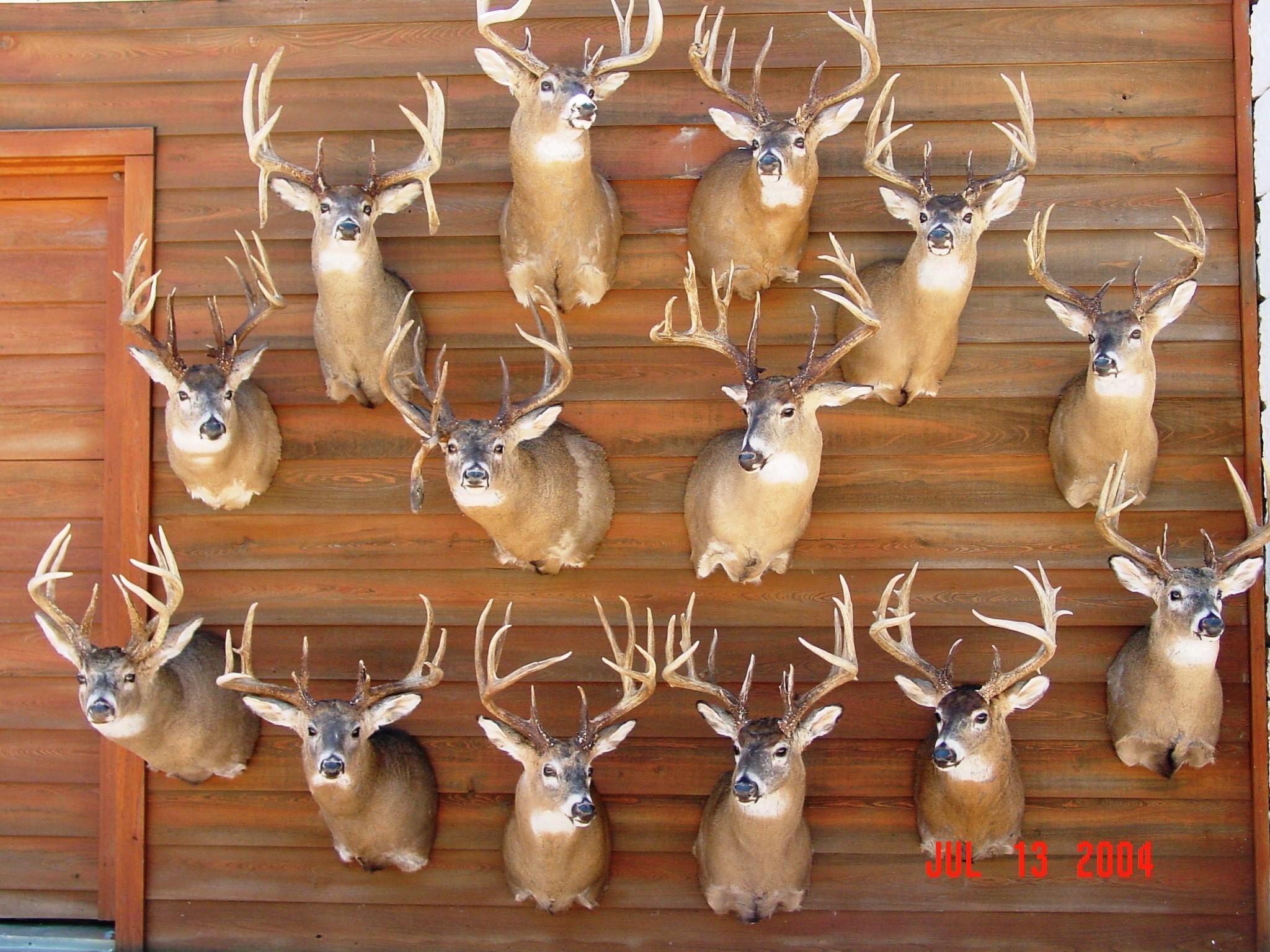 Kansas Whitetail Outfitters | Ks Deer | Hunting Kansas  Kansas Deer Rut 2021