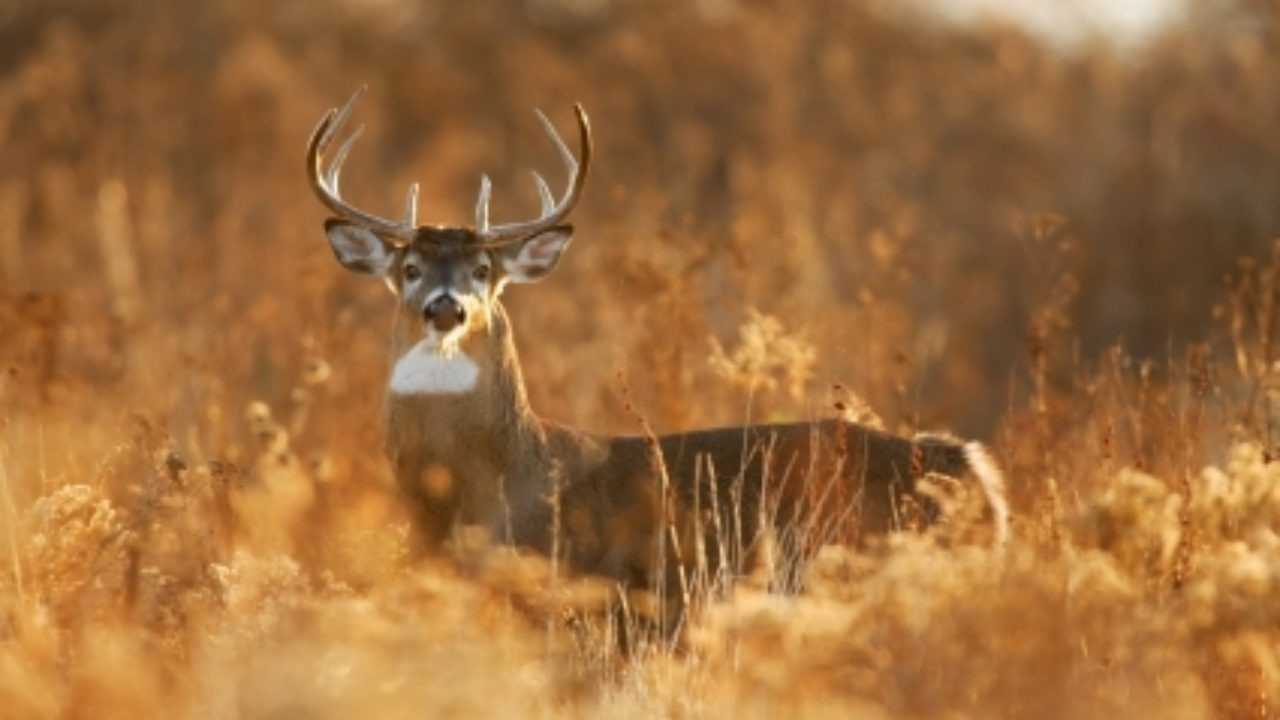 North Carolina Whitetail Deer Rut – North Carolina Deer Hunting  When Is Deer  Rut Season In  Gastonia Nc 2021