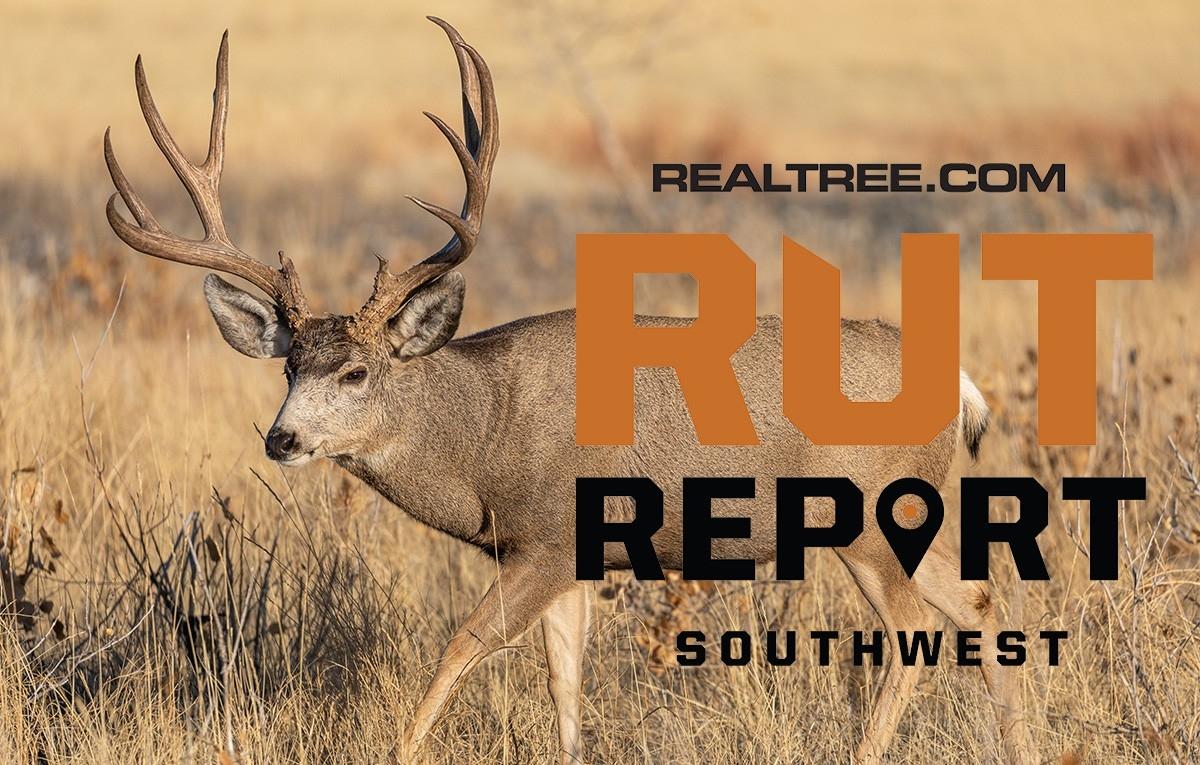 Nov. 6 Southwest Rut Report: 2020  Texas Deer Rut Dates
