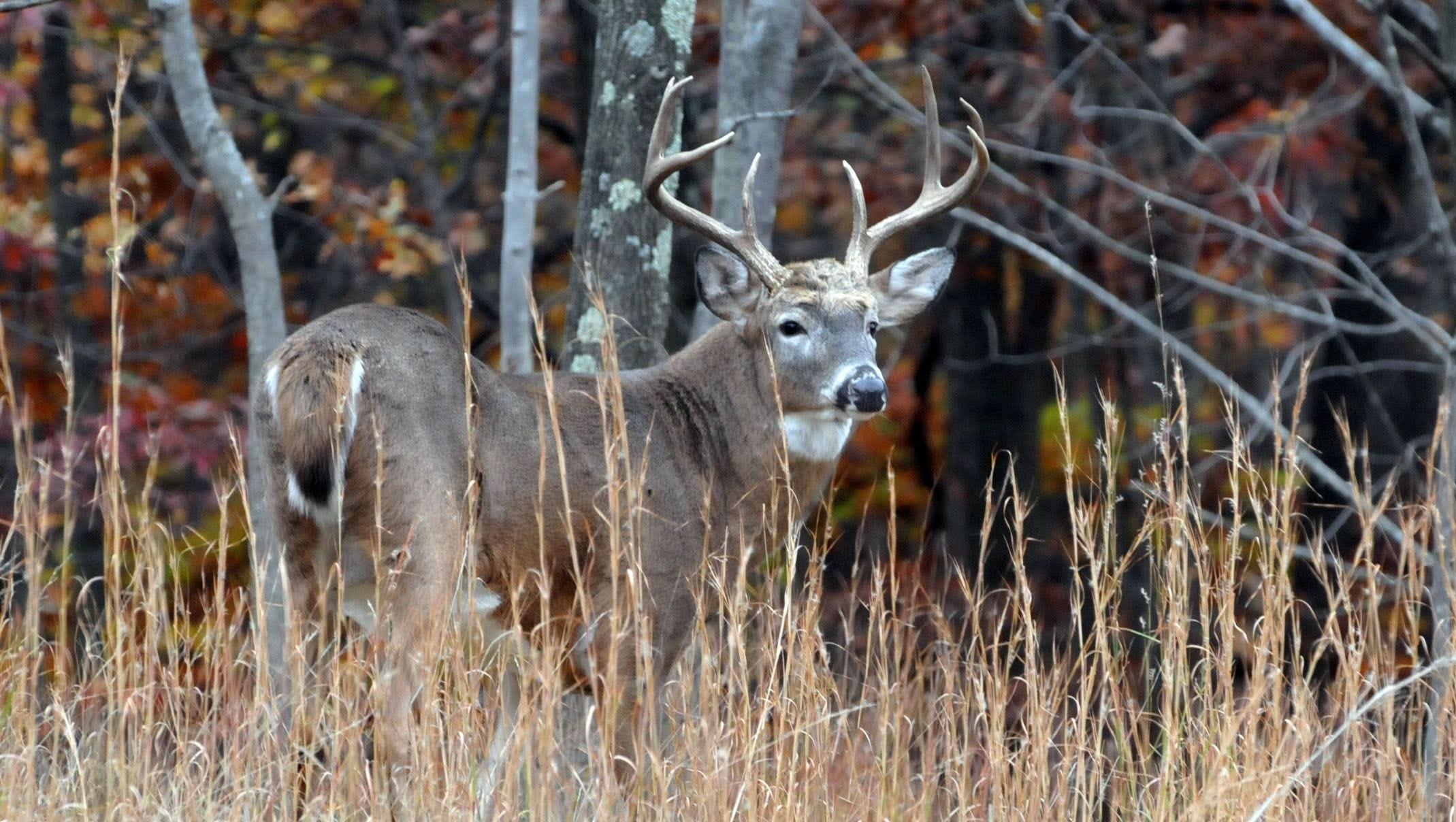 November Rut Is Time Go Deer Hunting  Virginia Deer Rut Dates