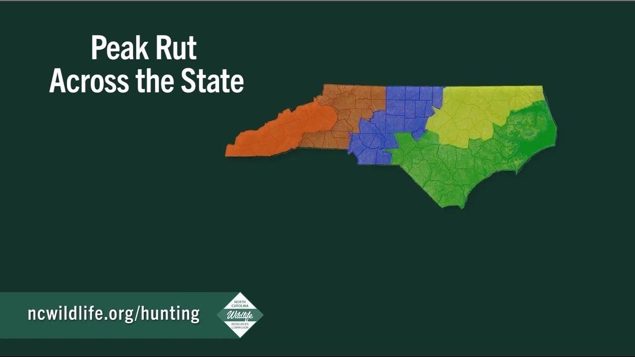 Peak Of The Rut Across North Carolina  When Is Deer  Rut Season In  Gastonia Nc 2021
