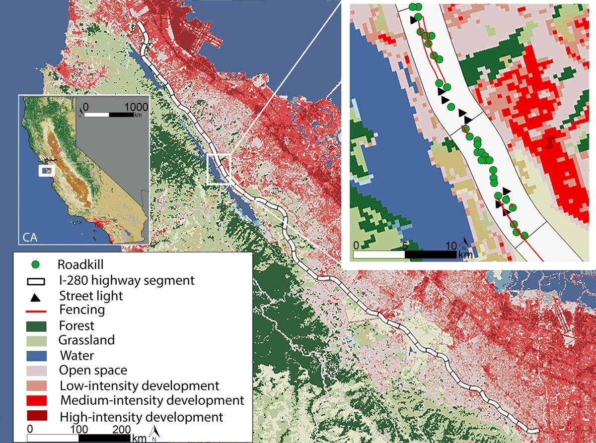 Roadkill Distribution At The Wildland‐Urban Interface  2021 2021 Georgia Rut Map