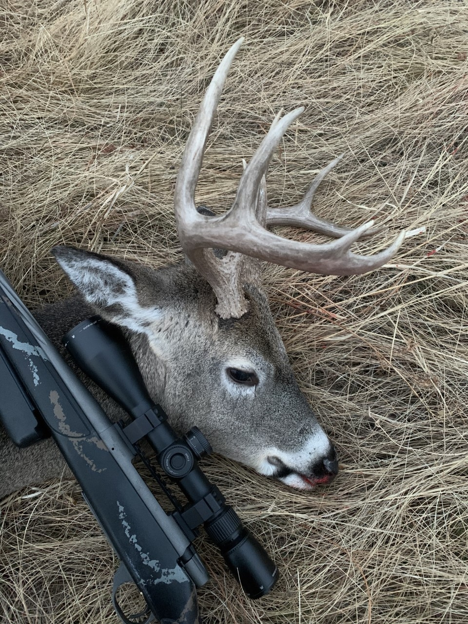 Rut Fresh Report: 11/12 | Meateater Hunting  When Is The Whitetail Rut Expected To Start In Sd