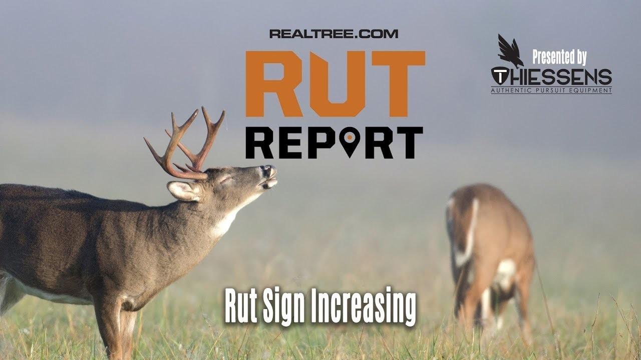 Rut Sign Increasing | Rut Report 2019 Presentedthiessens  2021 Rut Forecast  Nys
