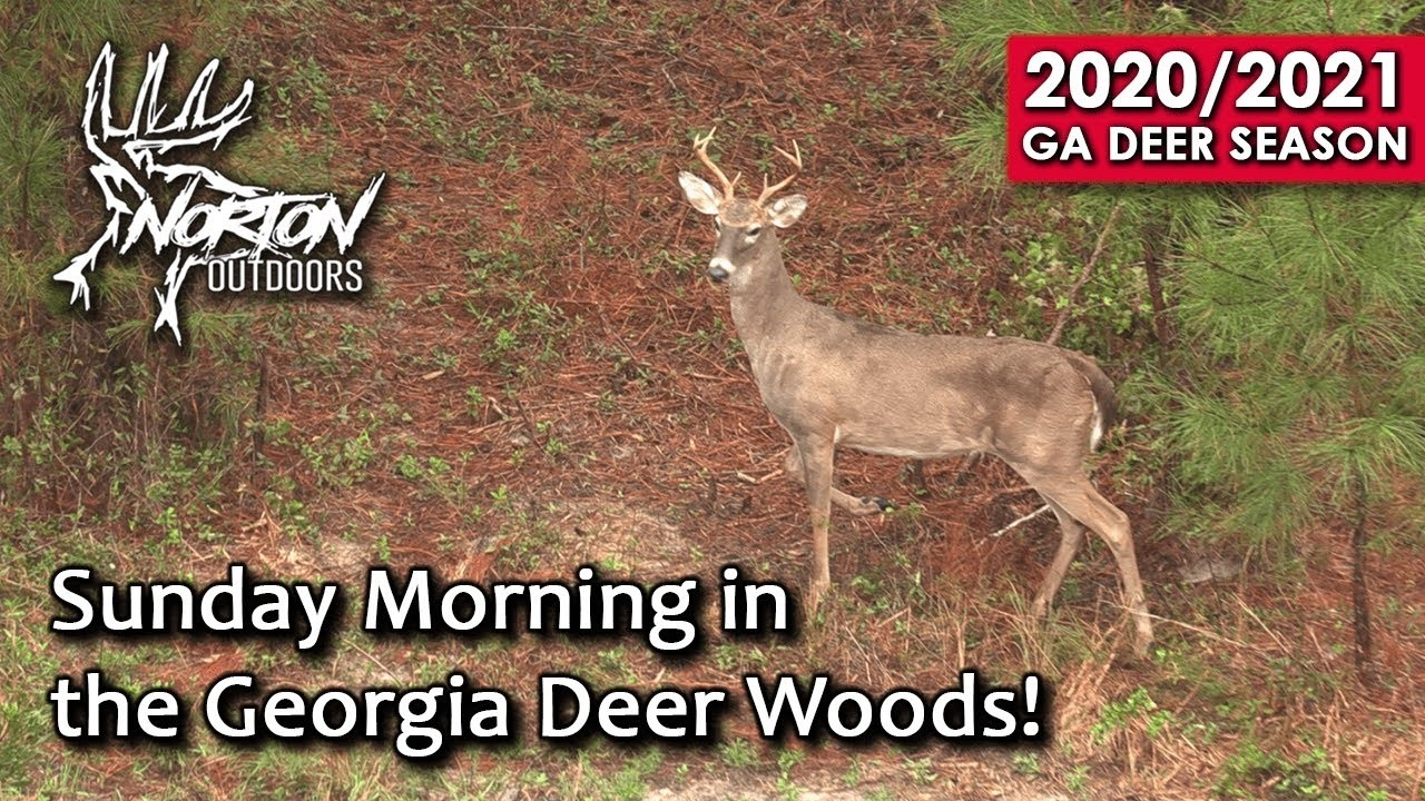 Sunday Morning In The Georgia Deer Woods | Self Filmed | 2019-2020 Season  Deer Season For 2021 In Georgia