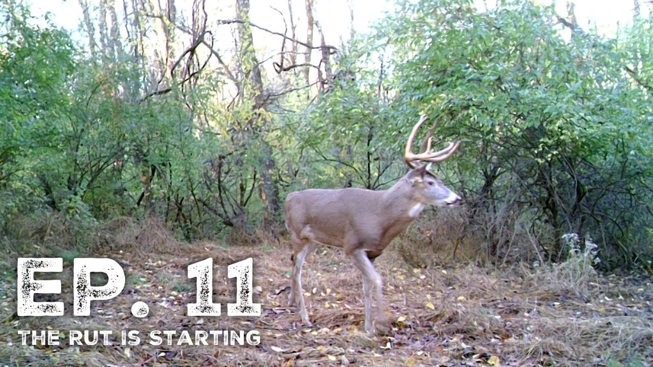 The Rut Is Starting! - Pa Archery Season 2019 Ep. 11  Whitetail Deer Rut In Pa