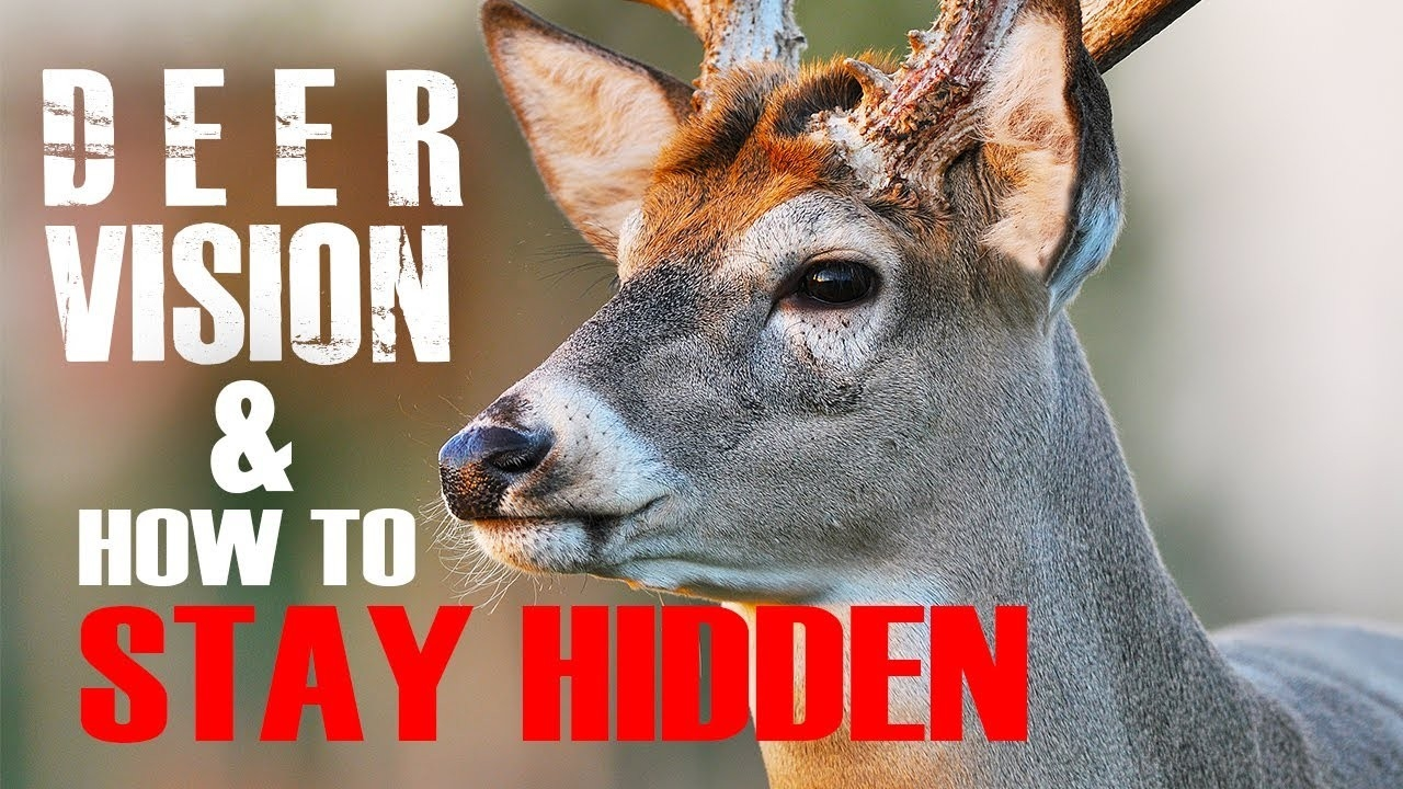 Time To Roam: What To Know About Whitetail Buck Dispersal  When Is Deer  Rut Season In  Gastonia Nc 2021