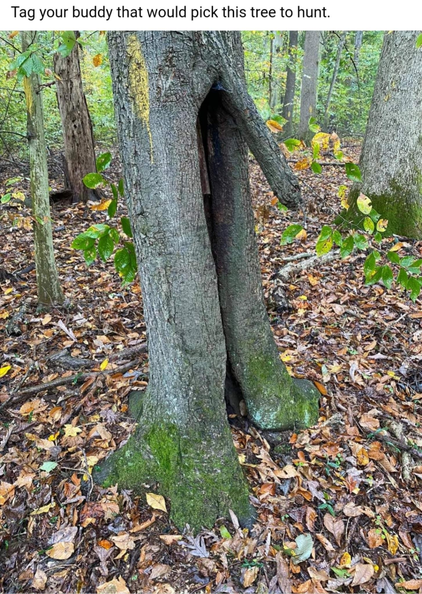 Tree Awareness. ..The Rut Is On - General Hunting Discussion  Rut In Nj