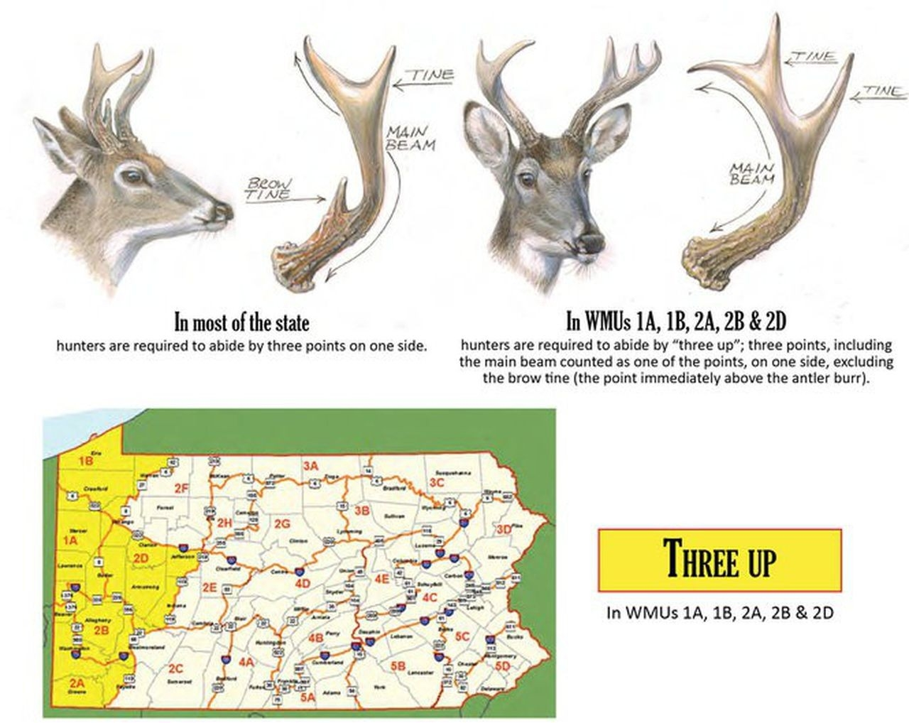 What'S The Outlook For Deer Hunting Season, Starting Monday  Indiana Deer Forcast