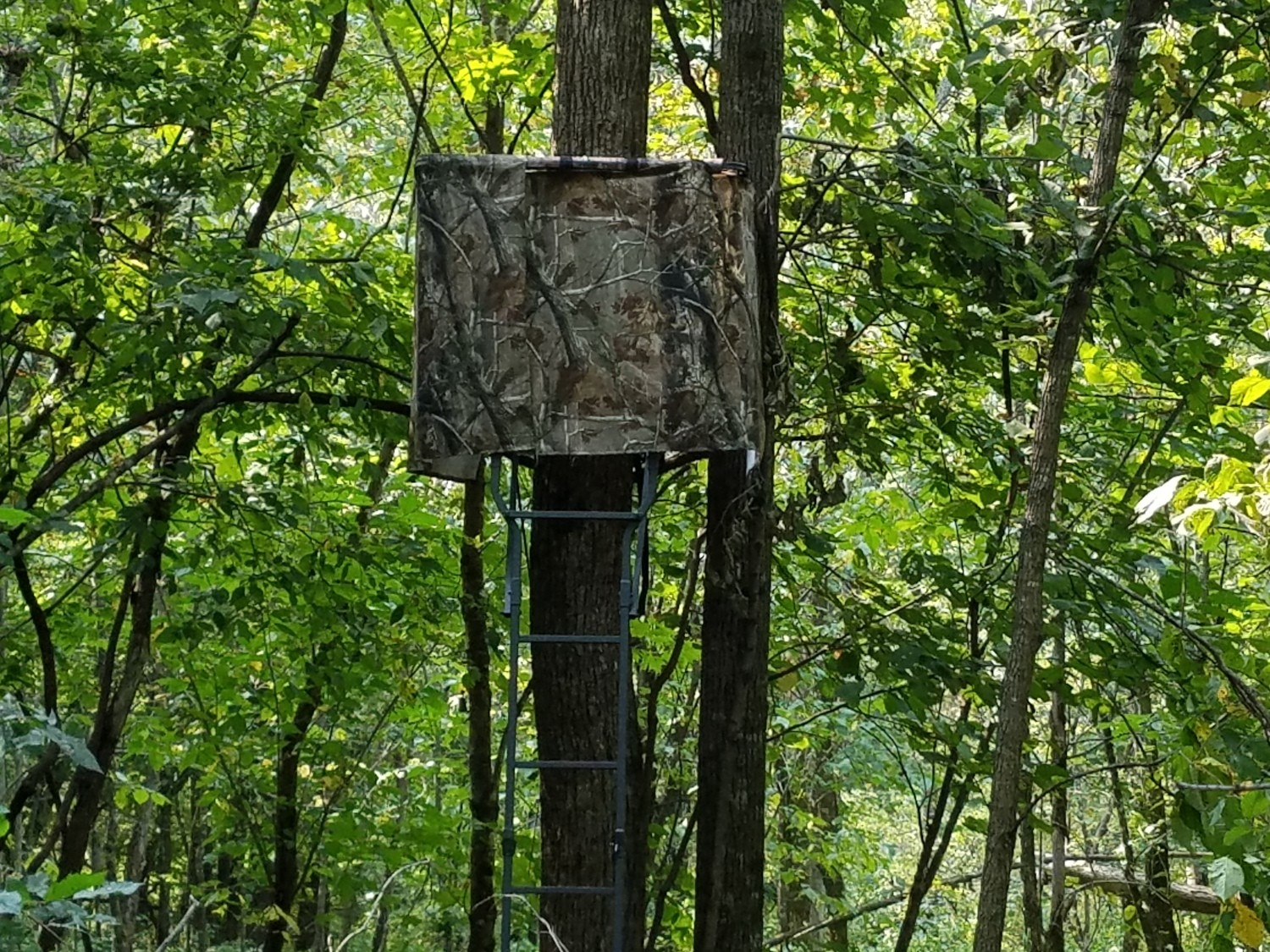 When To Rattle And Grunt For Deer - Buck Calling!  Rut Forest For 2021 2021 In Ark
