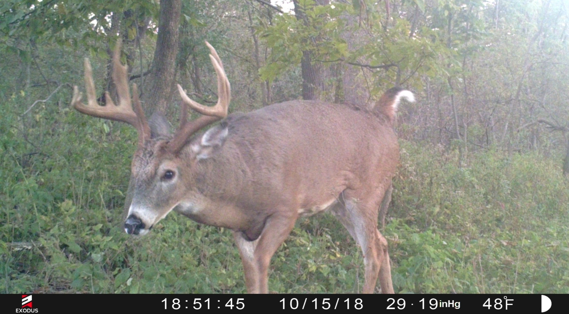When Will The Whitetail Rut Begin   Whitetail Habitat Solutions  2021 Deer Rut Forecast