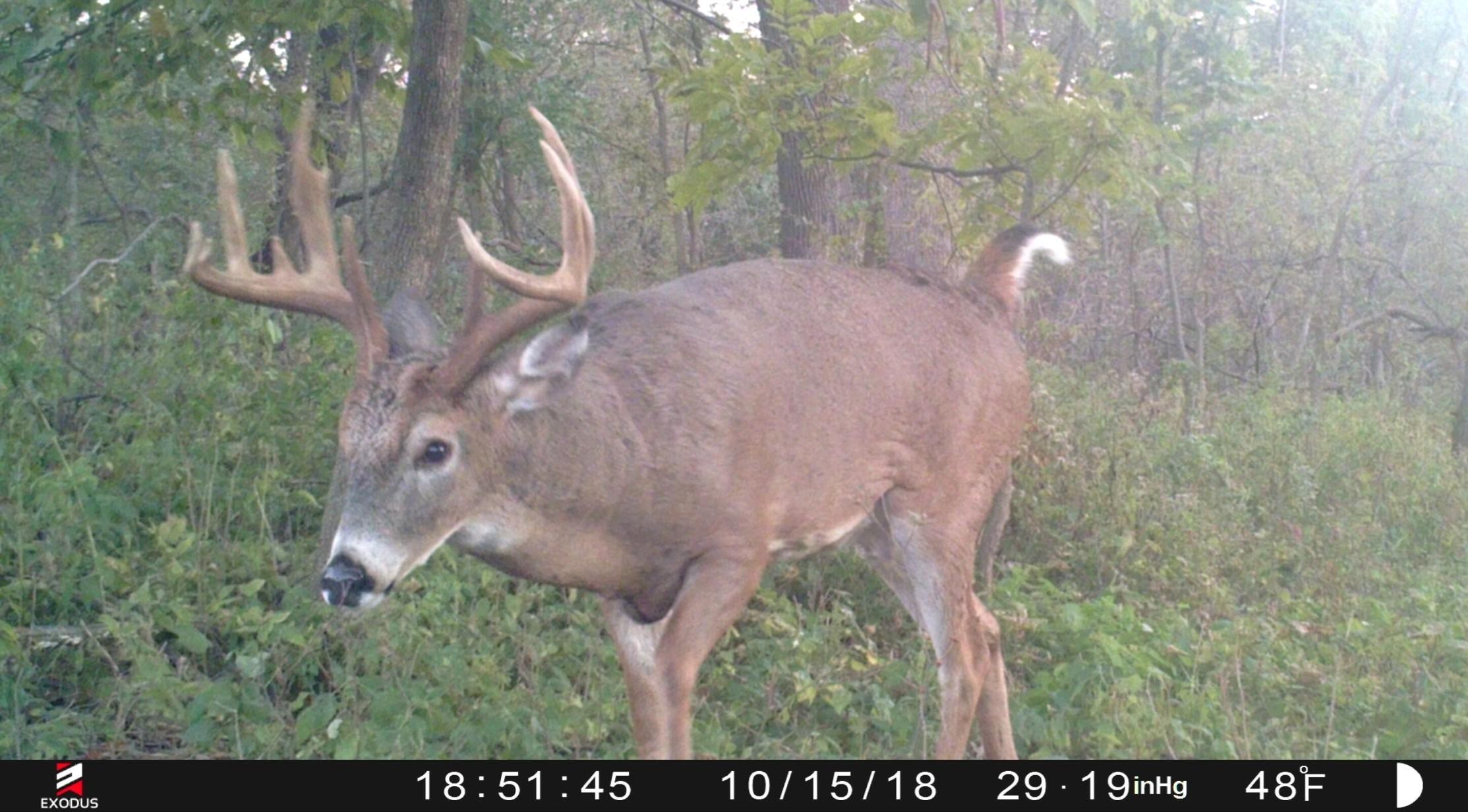 When Will The Whitetail Rut Begin | Whitetail Habitat Solutions  Nj Deer Rut Forcast 2021